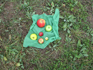 Große, kleine, kitzekleine,grüne, gelbe,