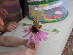 Summer Reading Butterfly Release