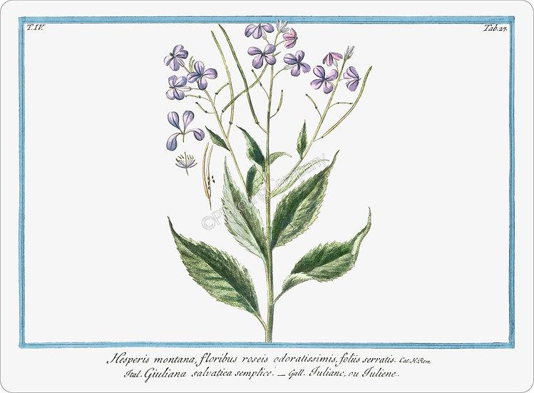 Bonelli's Botanicals 'Sweet Rocket' Placemat