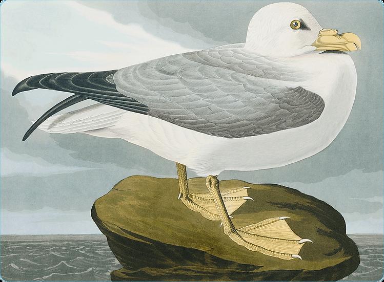 Audubon 'Fulmar Petrel' Placemats - Set of 4