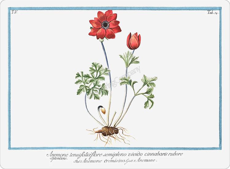 Bonelli's Botanicals 'Anemone Cremisino' Placemat