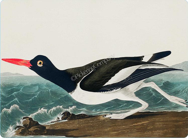 Audubon 'Pied Oyster-Catcher' Placemat