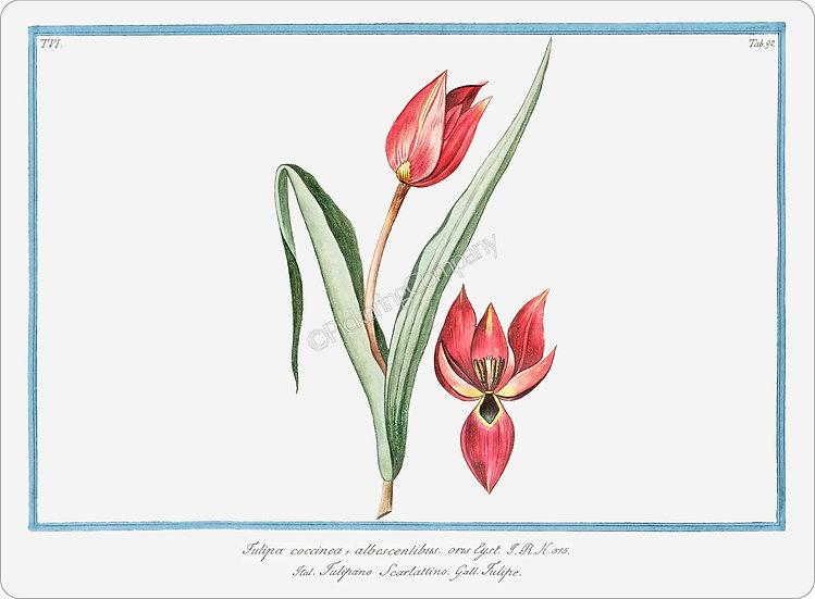 Bonelli's Botanicals 'Scarlet Tulip' Placemat