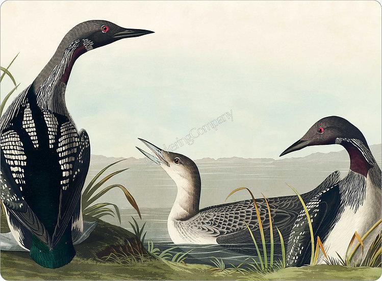 Audubon 'Black-throated Diver' Placemat