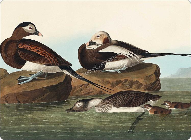 Audubon 'Long-tailed Duck' Placemat