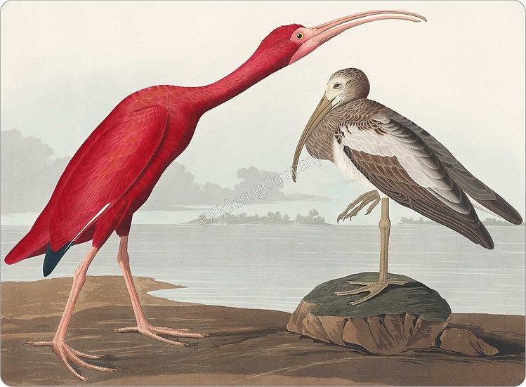 Audubon 'Scarlet Ibis' Placemat