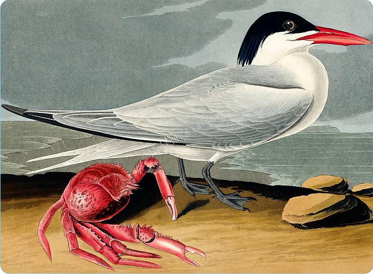 Audubon 'Cayenne Tern' Placemat