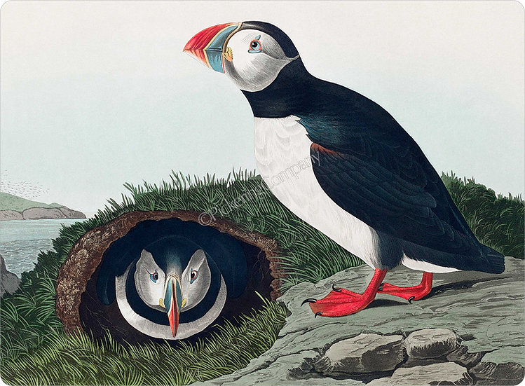 Audubon 'Puffin' Placemat