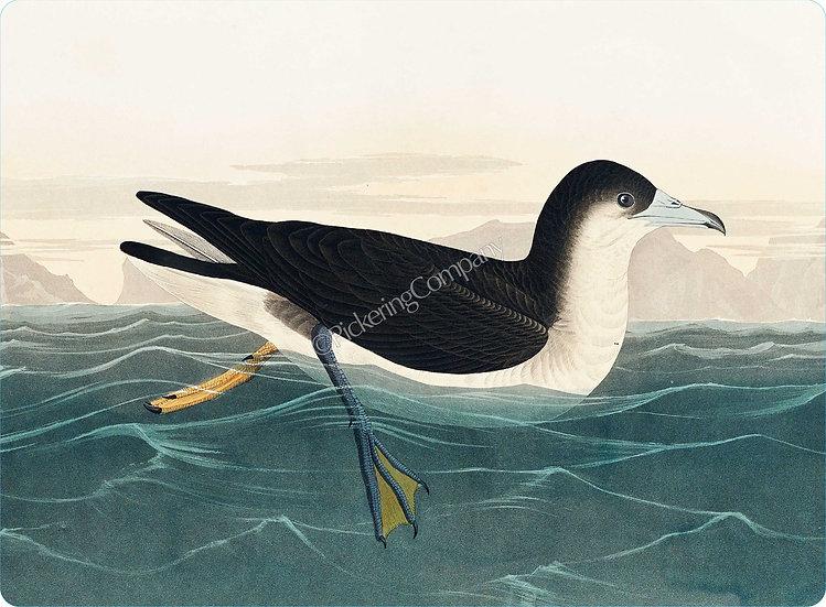 Audubon 'Dusky Petrel' Placemat