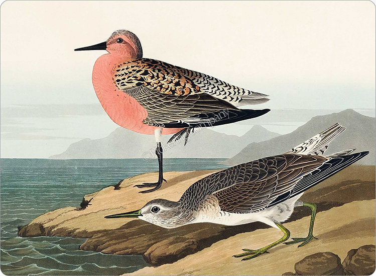 Audubon 'Red-breasted Sandpiper' Placemat