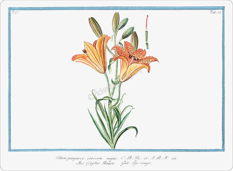 Bonelli's Botanicals 'Orange Lily' Placemat