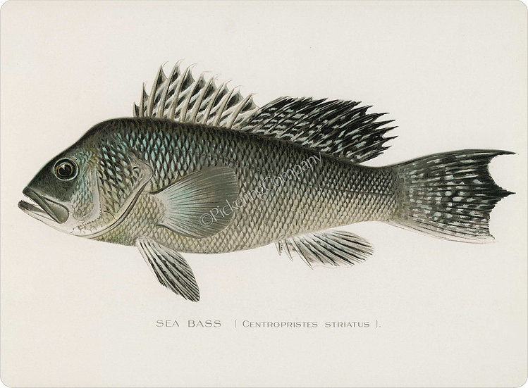 Denton 'Sea Bass' Placemat
