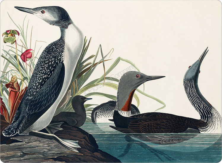 Audubon 'Red-Throated Diver' Placemat