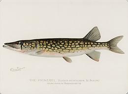 Denton Fish