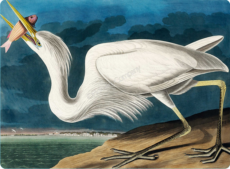 Audubon 'Great White Heron' Placemat