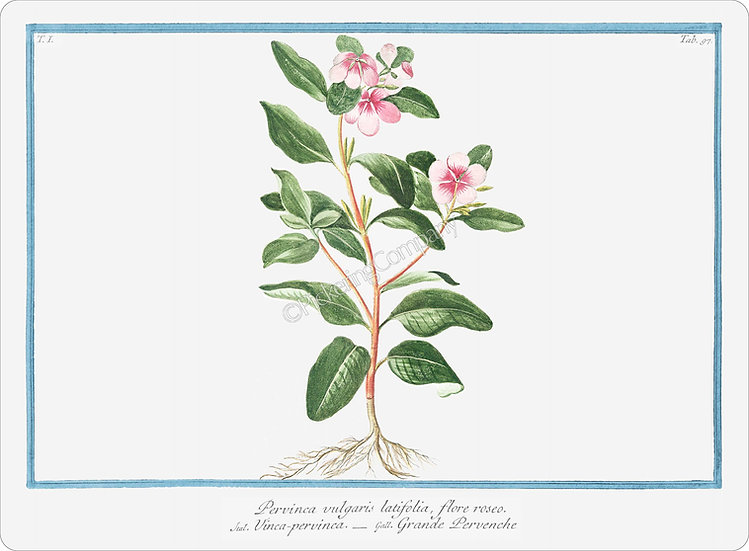 Bonelli's Botanicals 'Greater Periwinkle' Placemat
