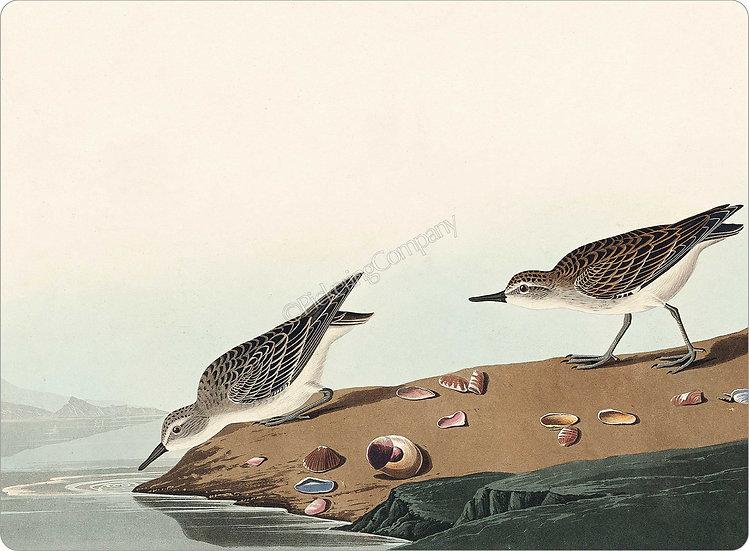 Audubon 'Semipalmated Sandpiper' Placemat