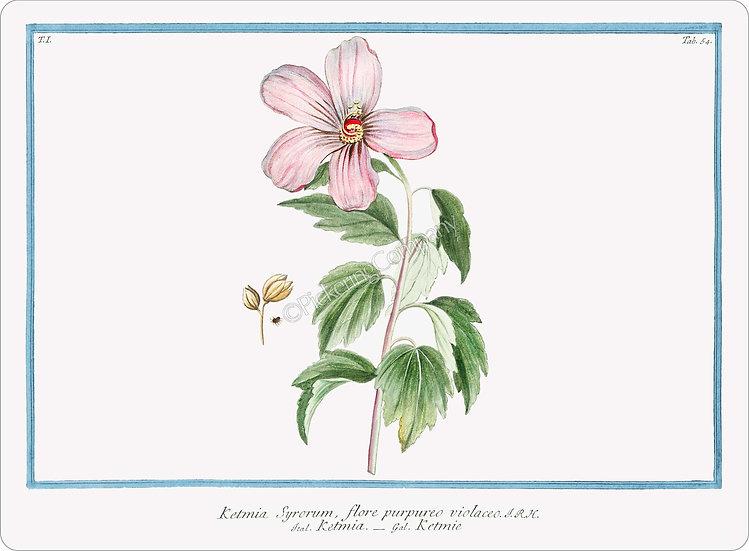 Bonelli's Botanicals 'Rose of Sharon' Placemat