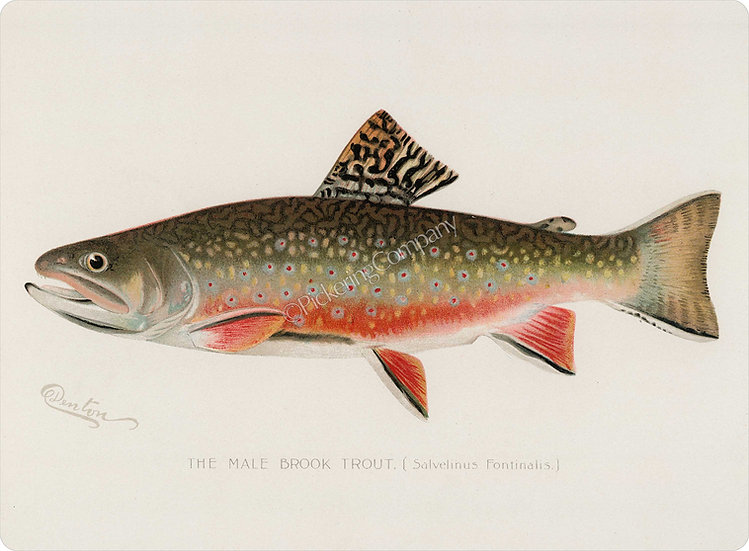 Denton 'Brook Trout' Placemat