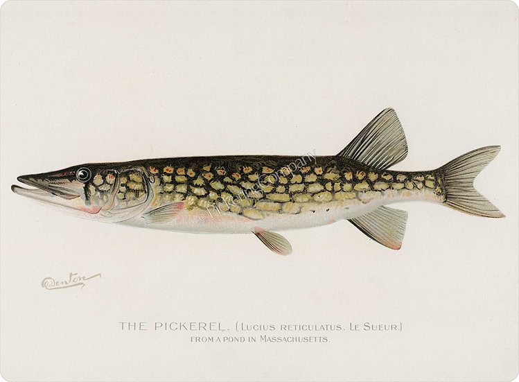 Denton 'Pickerel' Placemat