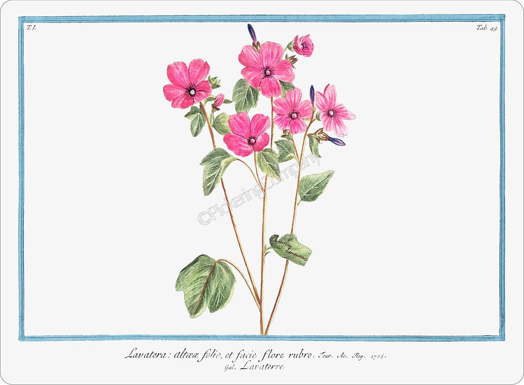 Bonelli's Botanicals 'Tree Mallow' Placemat