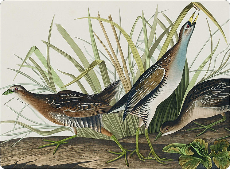 Audubon 'Sora or Rail' Placemat