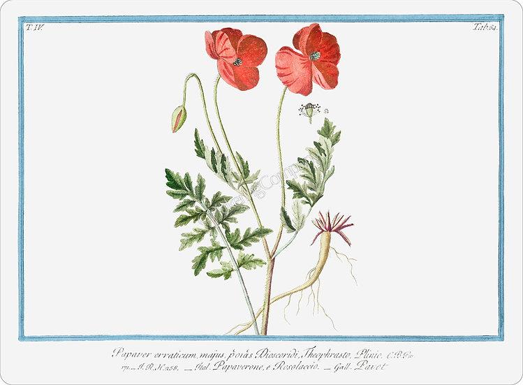 Bonelli's Botanicals 'Papaver Rhoeas' Placemat