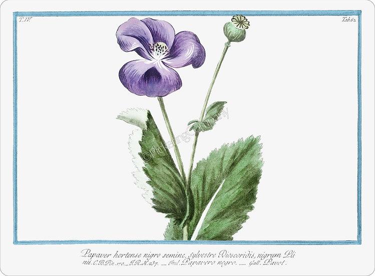 Bonelli's Botanicals 'Papavero negro' Placemat