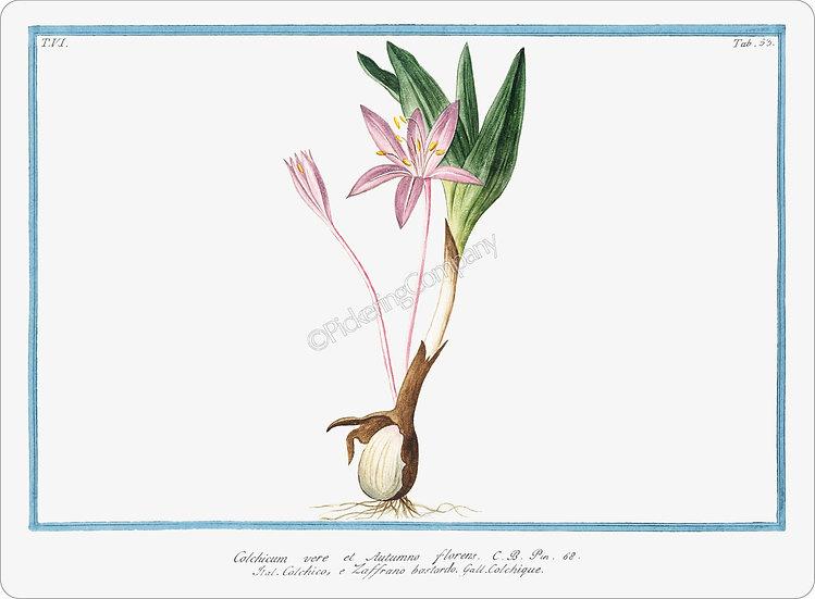 Bonelli's Botanicals 'Colchique' Placemat