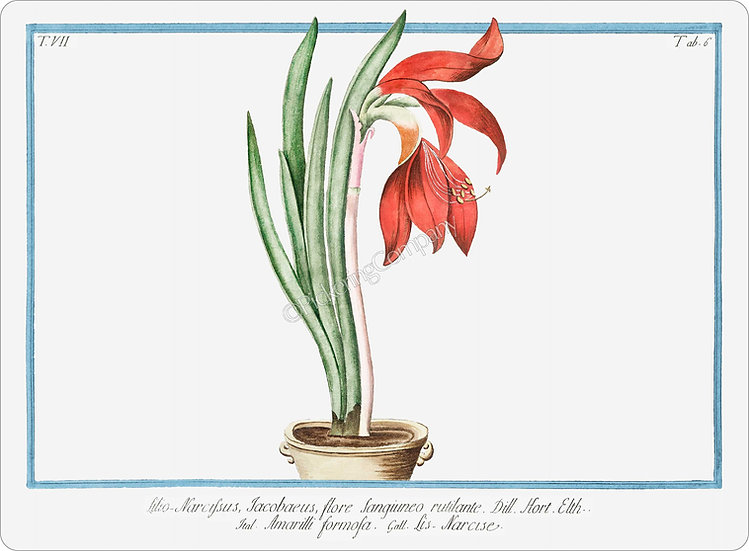 Bonelli's Botanicals 'Lily Daffodil' Placemat