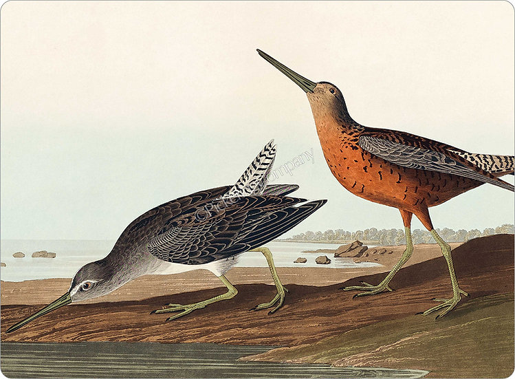 Audubon 'Red-breasted Snipe' Placemat