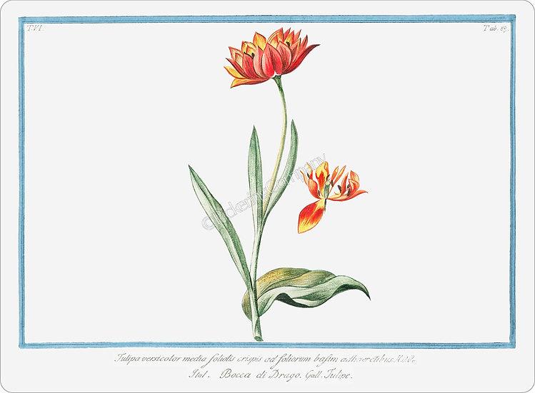 Bonelli's Botanicals 'Multicolored Tulip' Placemat