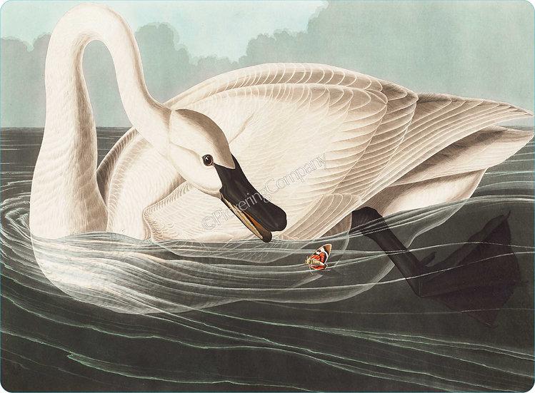 Audubon 'Trumpeter Swan' Placemat