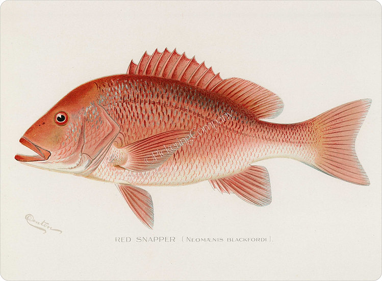 Denton 'Red Snapper' Placemat