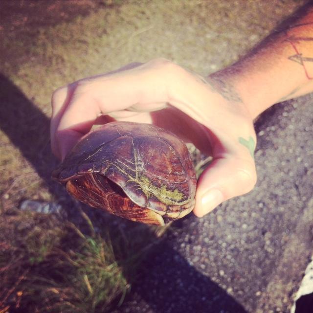 Turtle31.JPG
