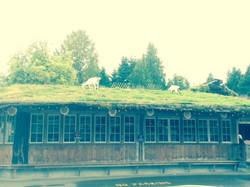 Goast On The Roof!