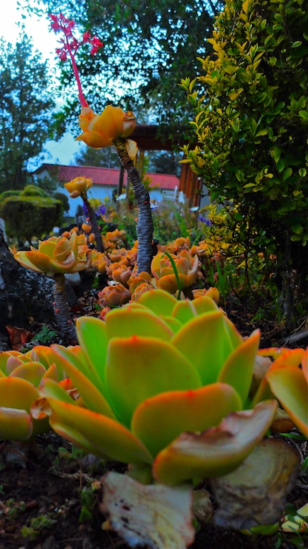 Garden at Puesta del Sol