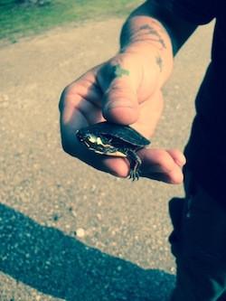 One Little Turtle