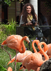 Kate & Flamingos 1.JPG