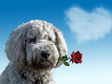 Valentinovo - kako ga preživeti samski