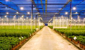 grow_lamps_for_green_houses_4.jpg