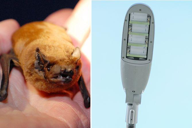 diese-hollaendische-bat-lamp-ist-tierfreundlich--etwa-fuer-fledermaeuse-die-gewo