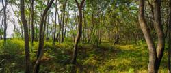 morton forest