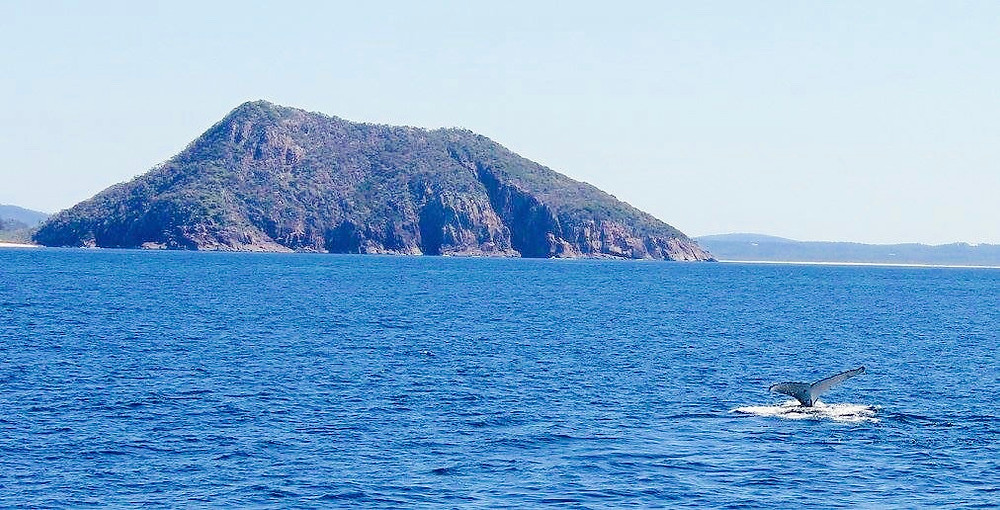 Port Stephens, Whale Watching