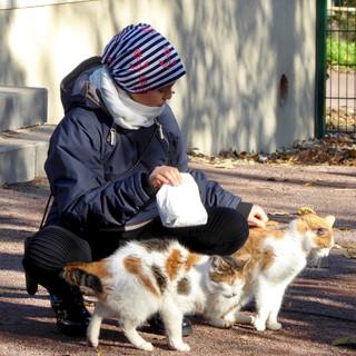 Tierparkkatzen