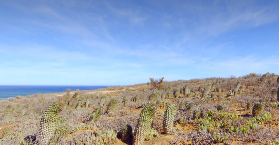 Sandveld Land of Contrast