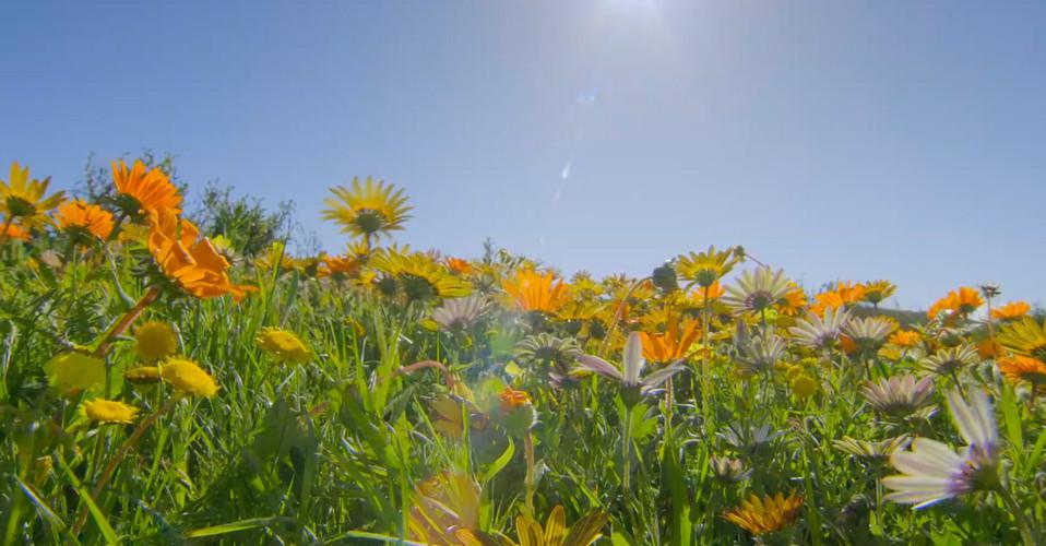 Namaqualand The Desert Bloom