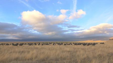Ngorongoro Crater Cursed Haven
