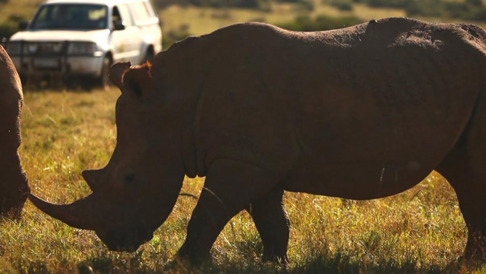 Mazda | Rhino