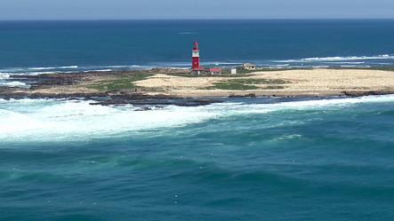 Algoa Bay Last Refuge of The African Penguin